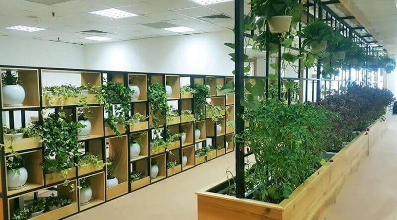 Mang không gian xanh vào chốn công sở giúp tăng hiệu quả công việc
